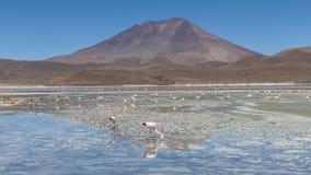 Laguna Hedionda - la Bolivia Fotografia Stock