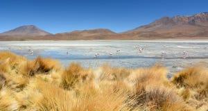 Laguna Hedionda PotosÃafdeling bolivië Royalty-vrije Stock Foto's