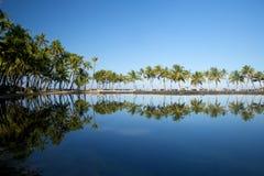 Laguna hermosa con las palmeras, cielo azul Fotografía de archivo