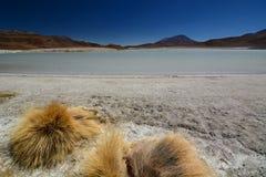 Laguna Honda Departamento de Potosà bolivia foto de archivo libre de regalías
