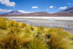 Laguna Honda in sud Lipez Altiplano reserva, Bolivia Royalty Free Stock Photos