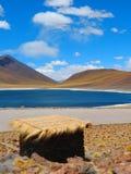 Laguna Miniques, Atacama-Woestijn Stock Fotografie
