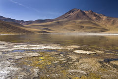 Laguna Miscanti - Чили Стоковые Фотографии RF