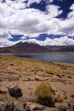 Laguna Miscanti Stock Images