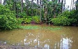 Laguna naturale coperta in alberi e nella retroterra selvaggia la Gold Coast Australia di vita Fotografie Stock Libere da Diritti
