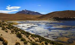 Laguna Negra svartlagun Altiplano, Bolivia Royaltyfri Bild