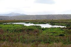 Laguna Nimez, a wildlife reserve at El Calafate in Patagonia, Argentina. The reserve is a few steps from the city center and close to Lake Argentino. The royalty free stock photography
