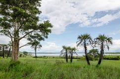 Laguna pacifica con acqua calma, gli alberi, le palme e l'erba verde fertile nel paesaggio vicino allo zeto del ` di N, Angola de Fotografia Stock Libera da Diritti
