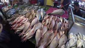 Assorted fish variety sold at market stall. Laguna, Philippines - February 29, 2016: various fish catch displayed at stall wet market stock video