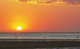 Laguna roja hermosa de la puesta del sol y del mar con los flamencos fotos de archivo libres de regalías