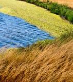 Laguna with seaweed Royalty Free Stock Photo