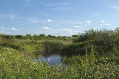 Laguna su un'isola di due alberi, Essex, Inghilterra Fotografia Stock Libera da Diritti