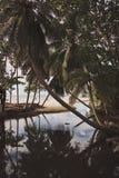 Laguna tropikalna wyspa Odbicie drzewka palmowe w wodzie Vertical rama obraz royalty free