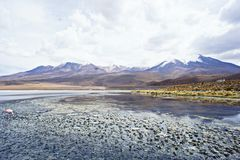 Laguna Verde Bolivia Royaltyfria Foton