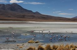 Laguna Verde on the Altiplano royalty free stock photos