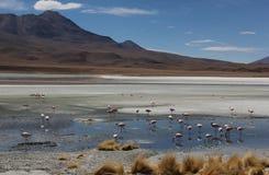Laguna Verde sul Altiplano fotografie stock libere da diritti