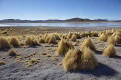 Laguna Verde and the volcanos Licancabur and Juriques within the Eduardo Avaroa Andean Fauna National Reserve against a blue royalty free stock photography