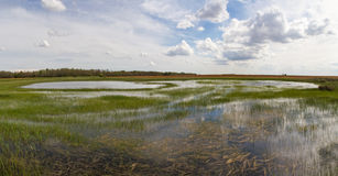 Laguna wetland in the field Stock Image