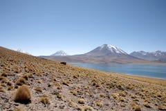lagunas της Χιλής atacama Στοκ Φωτογραφία