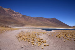 Lagunas - Atacama, Chile Royalty Free Stock Images