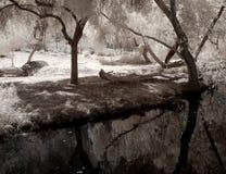 Lagune stock fotografie