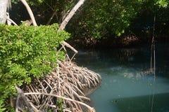 lagune Lizenzfreie Stockfotografie