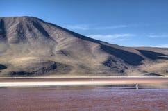 Lagune bij de hooglanden Stock Fotografie