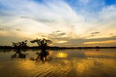 Lagune Cuyabeno Equateur de noir de fin de l'après-midi Image stock