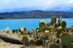 Lagune d'Alchichica Photographie stock