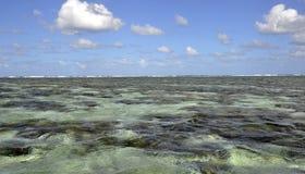 Lagune Dame Elliot Island Stockfotografie