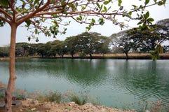 Lagune dans la plaine vénézuélienne images libres de droits