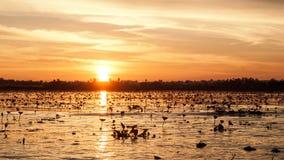 Lagune in de avonden stock afbeelding