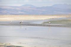 Lagune de Chaxa dans Salar de Atacama, Chili Photographie stock