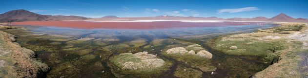 Lagune de rouge de Laguna Colorada Images libres de droits