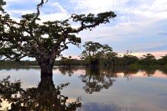 Lagune du fleuve Amazone Photographie stock libre de droits