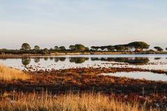 Lagune entourée par la végétation rougeâtre qui est reflétée dans l'eau plate à l'aube en Sardaigne image libre de droits