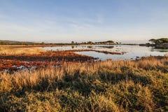Lagune entourée par la végétation rougeâtre qui est reflétée dans l'eau plate à l'aube en Sardaigne photographie stock