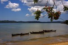 lagune et littoral de paume de bateau de branche Photos libres de droits