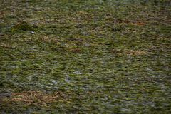 Lagune et montagnes de mer verte images libres de droits