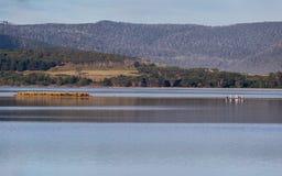 Lagune nuageuse de baie sur l'île du sud de Bruny, Tasmanie Images stock
