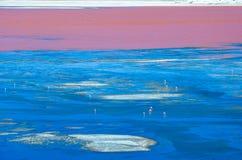 Lagune rouge, réservation d'Eduardo Avaroa Andean Fauna National, Bolivie Photos stock