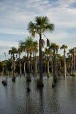 Lagune tropicale au Brésil Photographie stock
