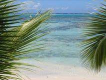 Lagune tussen palmen Royalty-vrije Stock Foto's