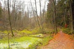 Lagune verte en automne orange en vallée de nature après pluie Photographie stock