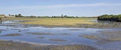 Lagunfågelfristad av södra Australien Arkivfoto