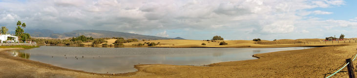 Lagunlaen Charca i dyerna av Maspalomas Arkivfoto