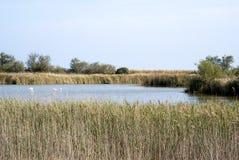 Lagunlandskap av Camargue Royaltyfria Bilder