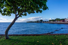 Lahaina Stock Photos