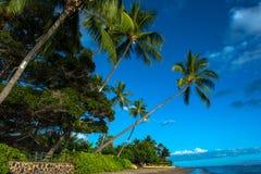 Lahaina Beach in Maui, Hawaii Stock Image