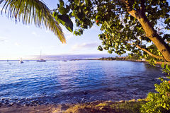 Lahaina Shore, Maui. Trees with red blossoms arch over calm waters along the Lahaina shoreline in Maui as boats lie at anchor in the distance Royalty Free Stock Images